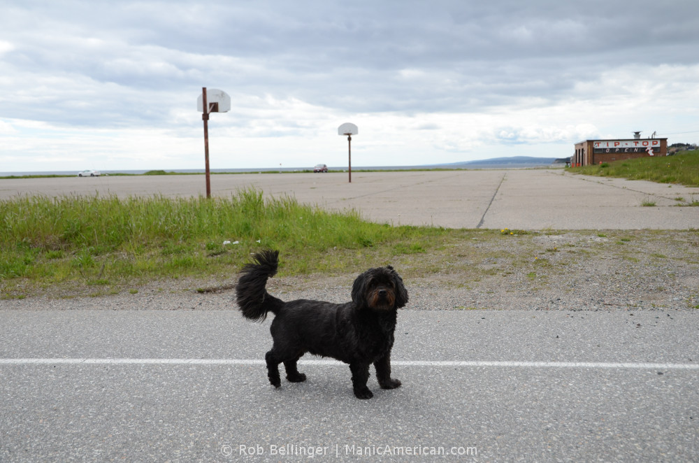 A brown dog in front of a concrete basketball court under a cloudy sky. Stephenville, Newfoundland.