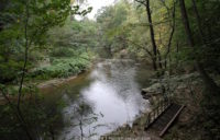 The Wissahickon Creek surrounded by trees