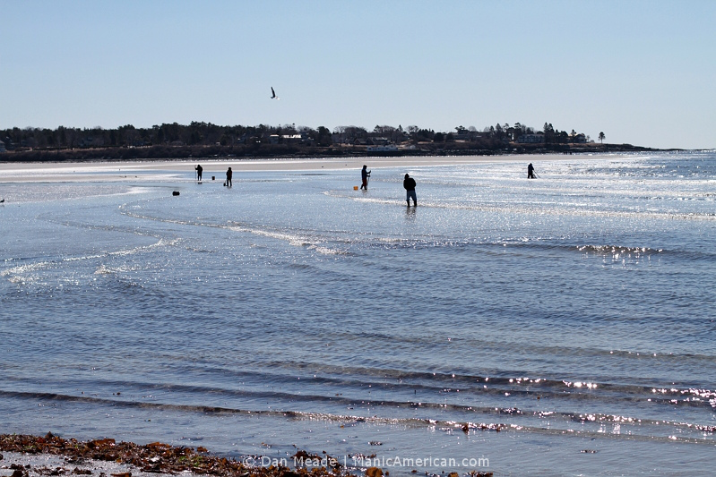 People dig for clams along the shore of Old Orchard Beach.