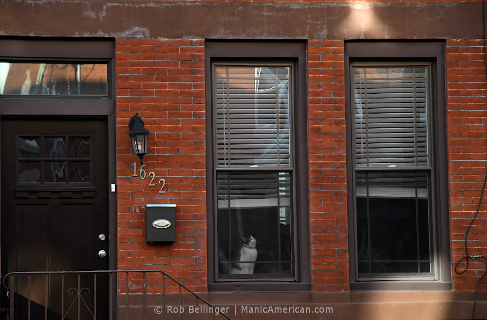 A cat sits in a window of a brick row house and looks upward